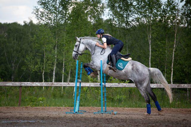 Грей Спортивная помесь,168 см в холке